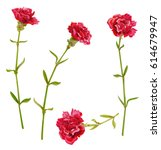 Set Of Red Carnation Schabaud...