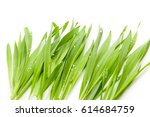 Young Barley Grass Isolated On...