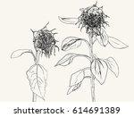 Die Sunflower. Vector Set Of...