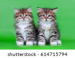 Stock photo siberian cats and kittens on green background perfect for postcards 614715794