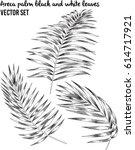 vector black and white areca... | Shutterstock .eps vector #614717921