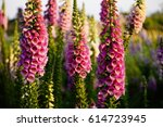 Pink Floral Background Of...
