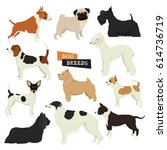dog collection geometric style