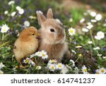 Stock photo bunny rabbit and chick are best friends 614741237