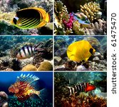 Small photo of Tropical fish collection, Nemofish, Abudefduf sexfasciatus, Masked Butterfly Fish, Chaetodon fasciatus