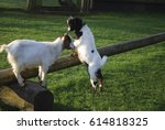 goat jumped up on a wooden log. | Shutterstock . vector #614818325