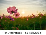 cosmos flowers with sunrise | Shutterstock . vector #614852015