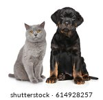 Stock photo cat and dog in front of white background 614928257