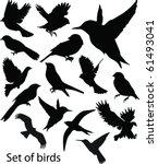 set birds.vector | Shutterstock .eps vector #61493041