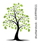 vector oak tree isolated on...   Shutterstock .eps vector #614994011