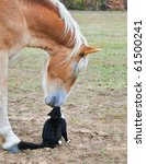 horse and a tiny cat   good... | Shutterstock . vector #61500241