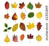 Small photo of autumny leaves isolated