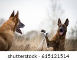 Stock photo dog is taking a photo of his best friend 615121514