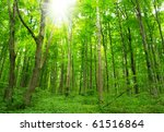 trees | Shutterstock . vector #61516864