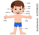 boy body parts diagram poster | Shutterstock . vector #615208325