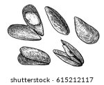 mussels illustration  drawing ... | Shutterstock .eps vector #615212117