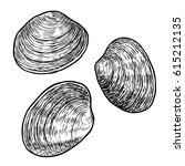 edible clam illustration ... | Shutterstock .eps vector #615212135