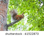 squirrel in city park | Shutterstock . vector #61522873