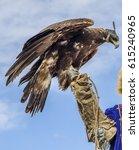 eagle hunter in traditionally... | Shutterstock . vector #615240965
