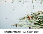 pink lotus blossoms or water... | Shutterstock . vector #615304109