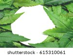 green leaves are arranged... | Shutterstock . vector #615310061
