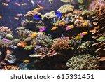 beautiful reef coral   Shutterstock . vector #615331451