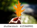 Single Autumn Maple Leaf In Hi...