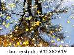 Autumn Leaves Falling In Puddle