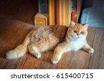Stock photo cute orange cat sitting on the floor in the room 615400715
