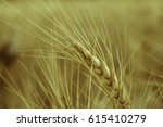 wheat ears close up on a... | Shutterstock . vector #615410279