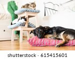Stock photo cat and dog together in apartments 615415601