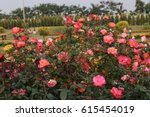 Stock photo beautiful roses and roses garden 615454019