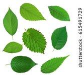 set of beautiful green spring... | Shutterstock . vector #615491729