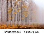 autumn poplars painted in white  | Shutterstock . vector #615501131
