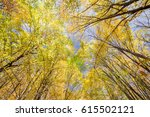 look up to the yellow trees... | Shutterstock . vector #615502121