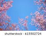 Pink Sakura Flower Against Blue ...