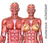 3d male and female torso... | Shutterstock . vector #615602669