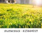 spring grass in sun light... | Shutterstock . vector #615664019