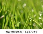 closeup of morning dew drops on ... | Shutterstock . vector #6157054