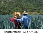 contemplating the plantation of ... | Shutterstock . vector #615774287