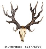 Schomburgk's Deer Head Skull...