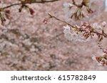 cherry blossom | Shutterstock . vector #615782849