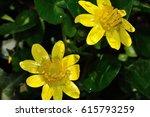 Yellow Flowers Golden Flower ...