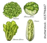 cabbage and lettuce vegetable... | Shutterstock .eps vector #615796667