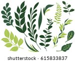 set leaf vector. collection of...