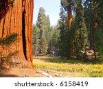 Giant Sequoias On The Edge Of ...