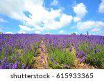 lavender garden under the nice... | Shutterstock . vector #615933365