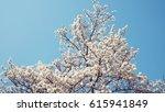 flower | Shutterstock . vector #615941849