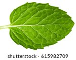 fresh mint leaves isolated....   Shutterstock . vector #615982709