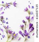spring violet flowers on a... | Shutterstock . vector #616037135